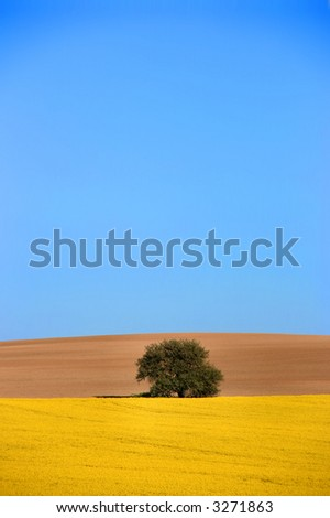 Beautiful idyllic landscape. Village in Slovakia. Canola fields and a lonely tree. - stock photo