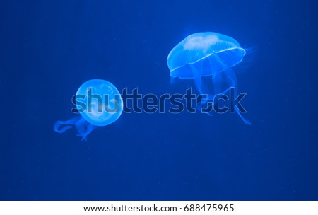 Stock Photo Beautiful illuminated glowing jellyfishes in blue color.