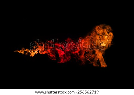 beautiful image of a great lion.. animal kingdom. . wildlife picture. great  tattoo. predator. amazing color effect. red and gold overlay in a dark background. lion king. african safari, zoo