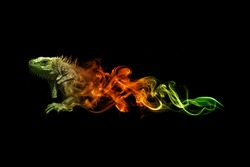 beautiful image of a lizard.. animal kingdom. wildlife picture. great  tattoo. amazing color. green and gold in a dark background.