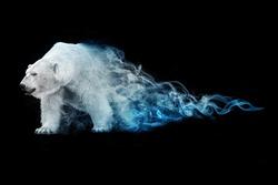 beautiful image of a polar bear, animal kingdom, south pole, antarctic wildlife, north pole