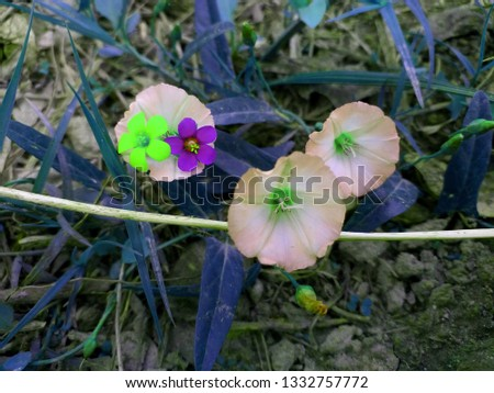 beautiful image of colorful flowers, cute flower, good morning, pink roses, purple flower,, lotus, White