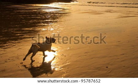 Photo of Beautiful image of dog running towards the sea at sunset with golden background and empty space for your text