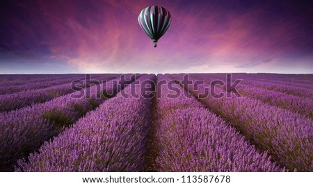 Beautiful image of lavender field Summer sunset landscape with hot air balloon
