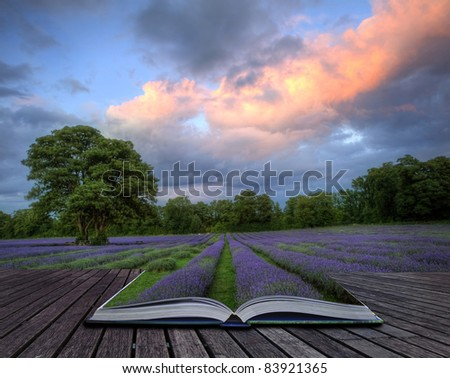 Beautiful image of stunning sunset with atmospheric clouds and sky over vibrant ripe lavender fields in English countryside landscape coming out of pages in magic book, creative concept image - stock photo