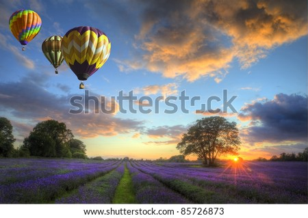 Beautiful image of stunning sunset with atmospheric clouds and sky over vibrant ripe lavender fields in English countryside landscape with hot air balloons flying high - stock photo