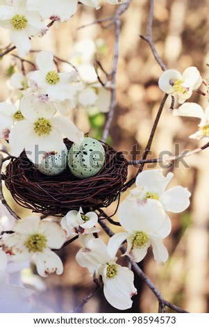 Beautiful image of two eggs in a small nest with dogwood blossoms surrounded it. Extreme shallow depth of field with some blur. Selective focus is on the eggs.