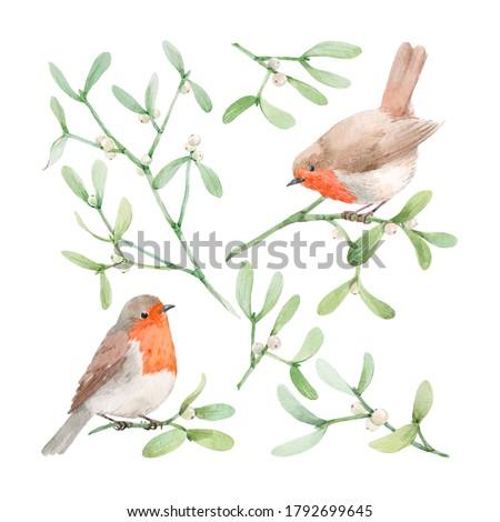 Beautiful image with watercolor mistletoe plant and robin bird. Stock illustraqtion. Zdjęcia stock ©