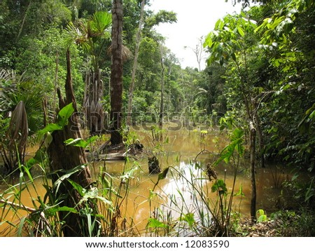 Beautiful, interesting, dengerous but also endangered rain forest in Amazon - Brazil