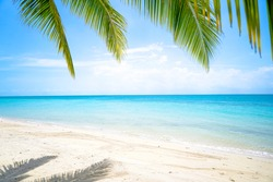 Beautiful Island with Ocean Wave on Sandy Beach and Coconut tree