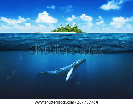 Beautiful island with palm trees. Whale underwater #267759764