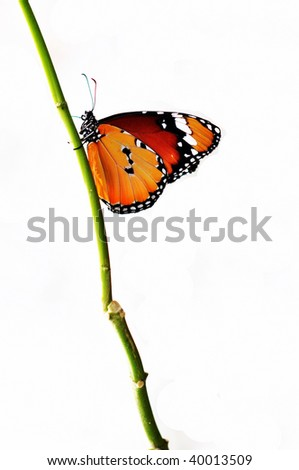 beautiful isolated butterfly on a branch