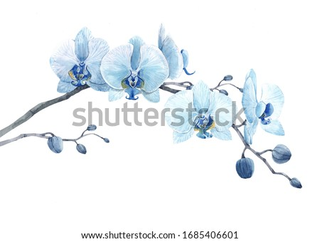 Beautiful isolated watercolor illustration, blue orchid Сток-фото ©