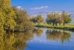 Beautiful Israeli landscape with a swimming duck and trees growing on the shores of lake Hula, popular location for birdwatching; Hula Valley, Northern Israel
