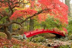 Beautiful Japanese Garden and red bridge