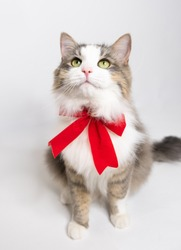 Beautiful kitten with a festive ribbon. A cute young cat in a red Christmas bow sits on a white background. Copy space