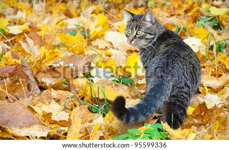 Beautiful kitty on autumn leaves