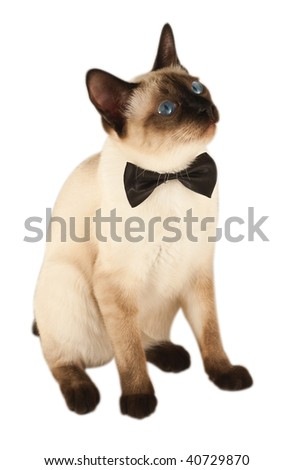 beautiful kitty with a bow on white