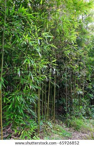 Beautiful Kula Botanical Garden Kula Maui Hawaii