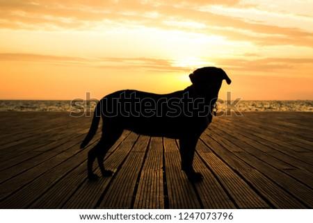 beautiful Labrador Retriever dog black silhouette shape in romantic shot opposite sunset orange light in waterfront sea shore line landscape #1247073796