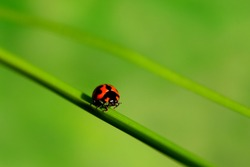 Beautiful Ladybird and firefly with beautiful background.  Ladybird fly away home…