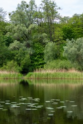 Beautiful lake with green leaves of water lilies. On the shore grow trees and reeds.Beauty of natural world. Eco-friendly landscape.