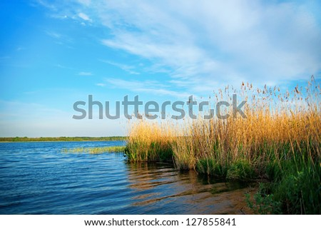 Beautiful lake with reeds on summer day - stock photo