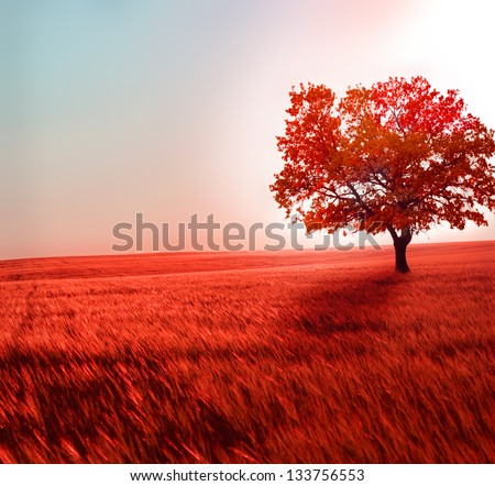 Stock Photo beautiful landscape