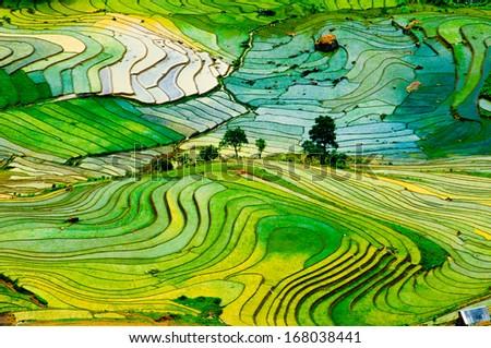 Beautiful landscape about terraced rice field in Laocai province, Vietnam