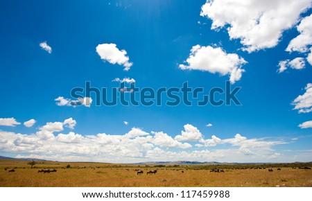 Beautiful landscape, Africa, Kenya, Maasai Mara
