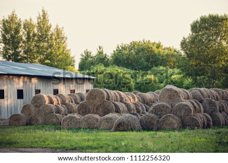 Beautiful landscape. Agricultural field. Round bundles of dry grass in the field against the blue sky. Bales of hay are lying in the field after harvesting wheat