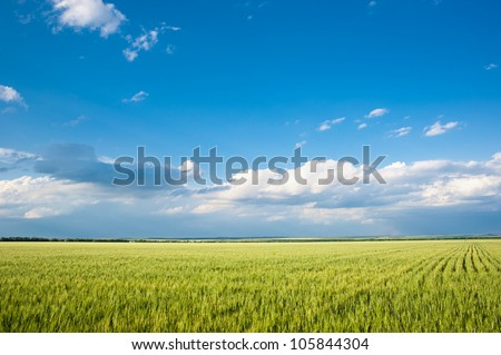 beautiful landscape. field and clouds