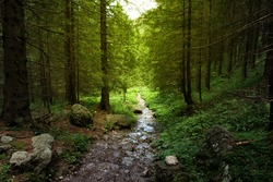 Beautiful landscape for printing. Walking path in the mountain forest.