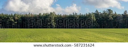 Beautiful landscape, forest, field and sky