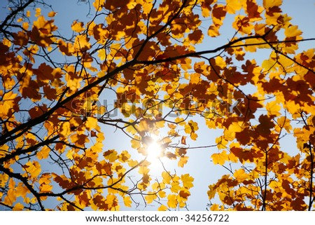 Beautiful landscape Forest with Solar beams making the way through the trees leafs