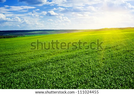 beautiful landscape. green field and clouds