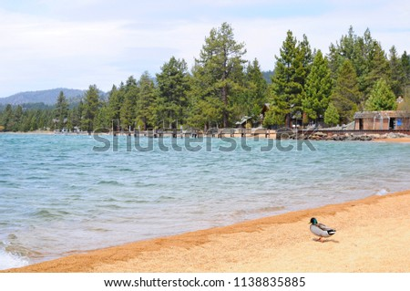 Beautiful Landscape in Spring at Lakeside of Lake Tahoe in California, United States #1138835885