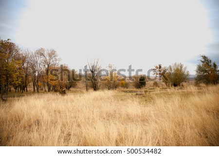 beautiful landscape in the forest during autumn #500534482