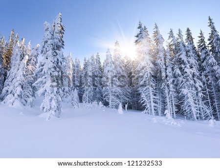 Beautiful landscape in the mountain forest. Winter morning. - stock photo