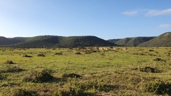 Beautiful landscape in the natural bushveld and dams