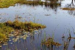 beautiful landscape in the Okavango swamps with water lilies, Okavango Delta, Botswana
