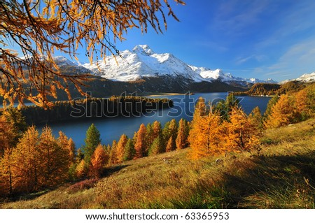 Beautiful landscape in the Swiss Alps on a day in autumn. The scene shows the Silsersee in the Engadin. In the back is mountain Piz de la Margna and in front is a forest of beautiful larches