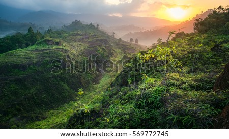 beautiful landscape nature in the morning. green plant and tree at rain forest mountain in spring. its good place for outdoor travel on vacation or holidays. abundant forest of thailand.