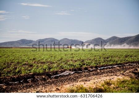 Beautiful landscape. Nature of Costa Rica, sugar cane.  #631706426