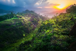 beautiful landscape nature with sunrise in the morning. green field in spring. 
