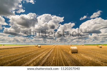 Beautiful landscape of agricultural wheat field - Round bundles of dry grass in the field,bales of hay