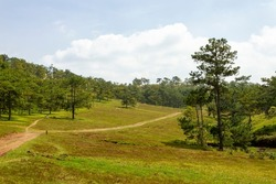 Beautiful Landscape Of Green Hill And Pine Forest In Da Lat, Vietnam.