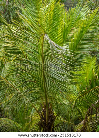 Beautiful landscape of humid tropical jungle during thunder storm
