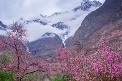 beautiful Landscape of Hunza Valley with Apricot blossom, Northern Area of Pakistan