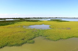 Beautiful landscape of lake with full of yellow flower of aquatic plants  against nice blue and clouds sky background during summer in Ravenna,Italy